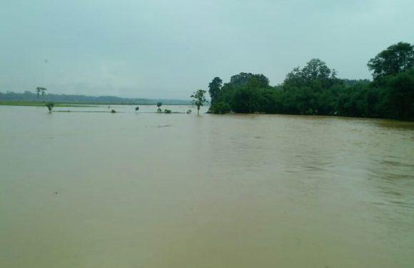 Kecamatan Kalirejo Puluhan Hektar Tanaman Padi Terancam Puso
