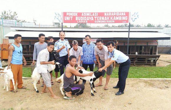 Sukseskan Revitalisasi Pemasyarakatan, Lapas Gunung Sugih Terima Hibah 11 Ekor Kambing dari Pemda Lampung Tengah