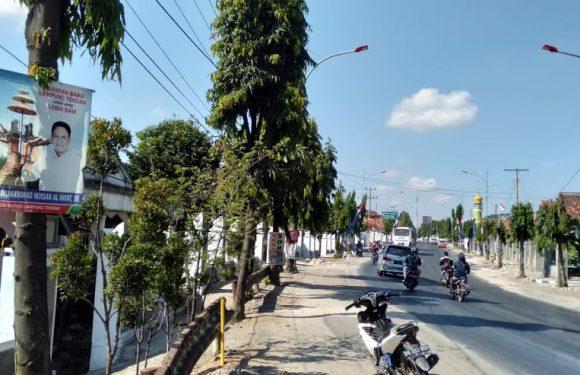 Tosa Soroti Pemasangan APK dan Poster Yang Menempel di Pohon